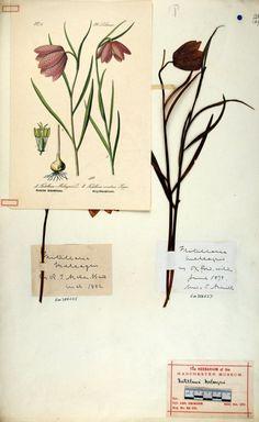 O. W. Thome, Flora von Deutschland (1886)