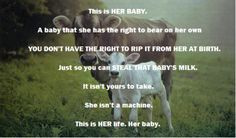 cow, baby, rights