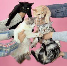 きのこ帝国『猫とアレルギー』ジャケット