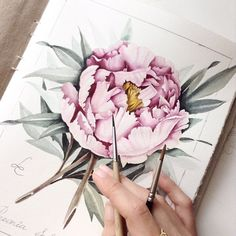 See this Instagram photo by @limkina • 5,292 likes Peony Painting, Watercolour Painting, Watercolor Sketch, Watercolour Tutorials, Watercolor Flowers, Watercolours, Botanical Art, Peony Illustration, Tree Peony