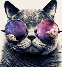 cool space cat