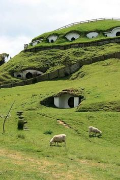 The Shire, New Zealand.