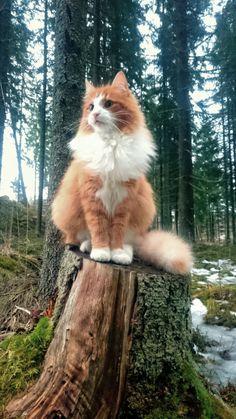 Chat en forêt