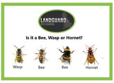 A small guide. Control Issues, Pest Control, Wasp, Yorkshire, Eco Friendly, Bee, Honey Bees, Bees, Bed Bugs Treatment