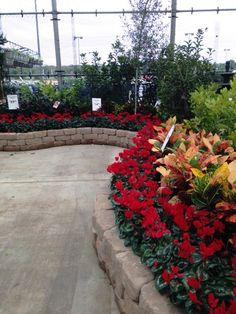 Loweu0027s 2513 Austin Tx #Lowes #pansy #cyclamen #fall #flowers #gardening