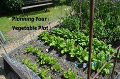 Planning your vegeta