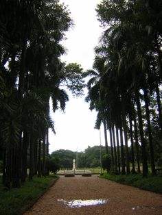 acharya-jagadish-chandra-bose-indian-botanic-garde