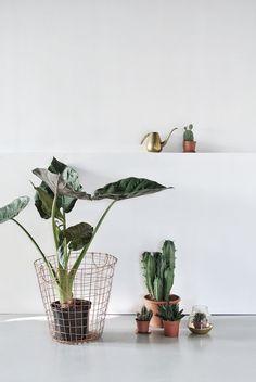 cacti and green plants in copper pots Cactus Plante, Pot Plante, Indoor Garden, Indoor Plants, Home And Garden, Belle Plante, Plants Are Friends, Interior And Exterior, Interior Design