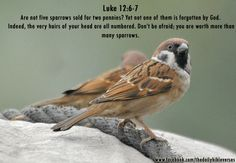 Luke 12:6-7 - Are not five sparrows sold for two pennies? And not one of them is forgotten before God. Why, even the hairs of your head are all numbered. Fear not; you are of more value than many sparrows.    Grace to you and peace from him who is and who was and who is to come, and from the seven spirits who are before his throne.  Co-Worker in Christ's Vineyard Justin Solomon SJ www.theophonyfm.com