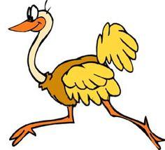 dato curioso osbre avestruz