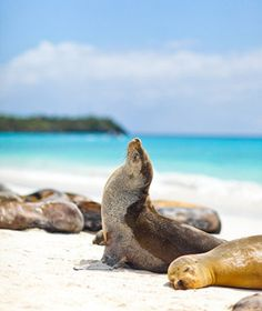 UNESCO World Heritage Site - Galapagos Islands, Ecuador.I wanna lie with the seals and the turtles :) Machu Picchu, The Places Youll Go, Places To See, Galapagos Islands, Travel And Leisure, World Heritage Sites, South America, Central America, Wonders Of The World