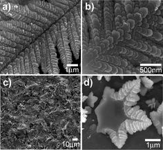 """initial stage, front, and back of a hexagonal dendritic """"leaf""""    credit goes to Carmen M. López and Kyoung-Shin Choi *    Electrochemical Synthesis of Dendritic Zinc Films Composed of Systematically Varying Motif Crystals†"""
