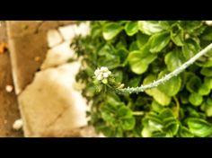 534 - Galho em flor #umafotopordia #picoftheday #brasil #brazil #n8 #snapseed #pixlromatic+