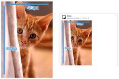 facebook-bildgröße-vertikal Facebook Marketing, Twitter, Instagram, Animals, Social Networks, Pictures, Animales, Animaux, Animal