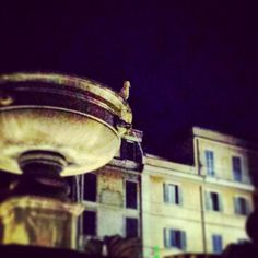 Er gabbiano a Santa Maria in Trastevere