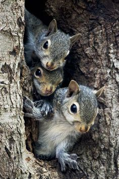 Huey, Duey and Louie hiding out......Are they still there? Is it safe to come out yet? Do you think those nuts will still be there?