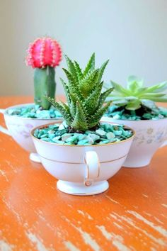 DIY Succulent Ideas - Creative Planters for Succulents with step by step tutorials for making. DIY gifts, garden and patio decor projects with plants. Mini Cactus Garden, Succulent Gardening, Succulent Pots, Cactus Flower, Planting Succulents, Container Gardening, Flower Pots, Flowers, Organic Gardening