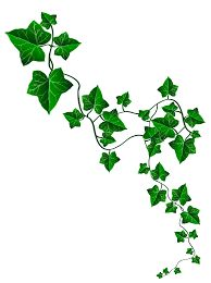 Image result for ivy Vine Drawing, Leaf Drawing, Delicate Tattoo, Subtle Tattoos, Redwood Tattoo, Ivy Tattoo, Minimalist Tattoo Meaning, Minimalist Tattoos, French Tattoo