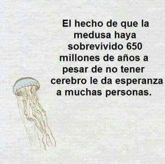 El hecho de que la medusa haya sobrevivido 650 millones de años a pesar de no tener cerebro le da la esperanza a muchas personas.