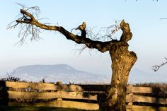 Blick zum Badacsony Strand, Monument Valley, Nature, Travel, Hungary, History, Vacations, Traveling, Naturaleza