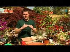 Kertépítési tippek: mediterrán életérzés Bougainvilleaval - YouTube Bougainvillea, Youtube, Youtube Movies