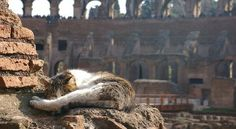 Cat in Rome www.budgettravel.com