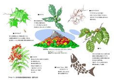 ≪Present Tree in 宮古≫ 第2回植樹イベント_20131013 植える樹種は、ヤマモミジ、イタヤカエデ、ミズナラ、ヤマザクラ、オオヤマザクラ、ナナカマド、ヤマボウシ、ブナです。樹種を説明する下のイラストは、前述の舘野様の作品です。