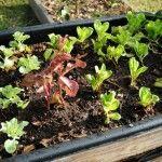 Growing in my garden today