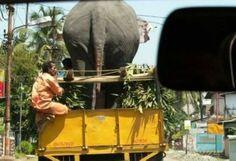 12 photos de transports bizarres d'animaux - 2Tout2Rien
