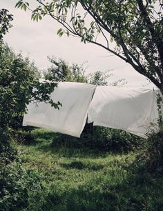 Crisp white sheets drying in the summer wind on a clothesline surrounded by lush greenery.