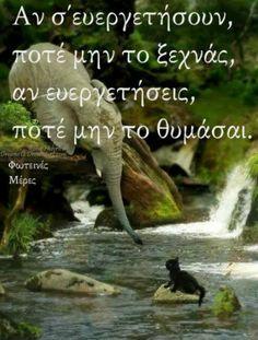 Favorite Quotes, Qoutes, Elephant, Quotations, Quotes, Elephants, Quote, Shut Up Quotes