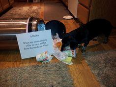Dog Shaming - Trashcan Buffet, a Haiku. I Love Dogs, Puppy Love, Cute Dogs, Dachshund Love, Daschund, Cat Shaming, Haiku, Funny Dogs, Dog Cat