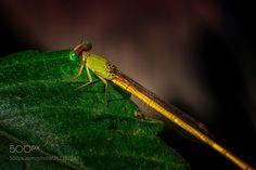 Close-up (jayanta basu / Kolkata / India) #NIKON D7000 #macro #photo #insect #nature