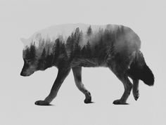 The Wolf (black & white version) Art Print by Andreas Lie