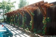 That would look so pretty on the east side of the garage!  Or perhaps between the treats on the west. Kiwi trellis