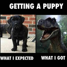 Getting a Puppy: Expectation vs. Reality
