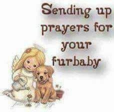 Sending up prayers for your furbaby. Prayer For Sick Dog, Prayer For You, Pet Loss Grief, Sending Prayers, Animal Reiki, Joy And Sadness, Dog Heaven, Wire Fox Terrier, Fox Terriers
