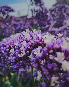 Youre even more beautiful. #Za #bf #shotoniphone #flowers #nature #botd #bestoftheday #vsco #purple Vsco, Shots, Beautiful, Purple, Nature, Flowers, Plants, Photography, Instagram