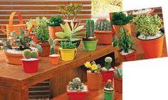 jardinagem e decoração-suculentas - Pesquisa Google