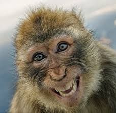 """Idk if this monkey is actually smiling. monkey """"smiles"""" can be a sign of aggression Smiling Animals, Happy Animals, Cute Baby Animals, Animals And Pets, Funny Animals, Monkey Monkey, Scary Animals, Smiling Faces, Funny Animal Pictures"""