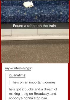 Found a rabbit on the train.