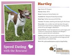 Today's Speed Dating candidate for adoption, foster or sponsorship is Hartley!