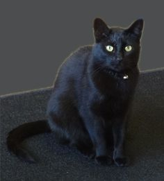 Shadow, our store cat, poses for a photo during a product shoot.