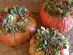 "Fall dressing pumpkins as planters ♥.... [[For you ""Newbies"" - CLICK on picture and it will take you to the website to explain Everything for this project.. ENJOY...]]"