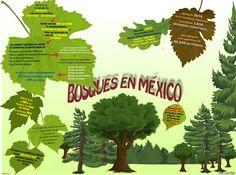 Infografías ~ Mira tu México