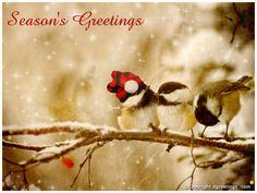 Download season's greetings wallpapers.