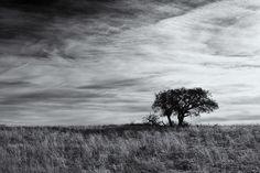 Williamson Valley Dawn by Jeff Morley