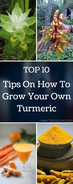 TOP 10 Tips On How To Grow Your Own Turmeric