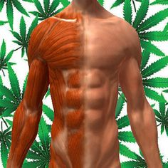 Cannabis and muscle spasms: The article talks about history and recent studies successfully using cannabis for muscle spasms for MS,  irritable bowel syndrome, premenstrual dysphoric disorder (PMDD) and PMS, cerebral palsy, Parkinson's Disease, amyotrophic lateral sclerosis (Lou Gehrig's disease), spinal cord injury and other nerve injuries, and may also relieve the bronchial spasms that cause asthma, though little formal research has been done on cannabis in any of these conditions.
