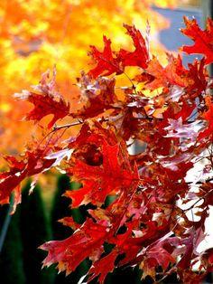 Вдохновляйтесь красками природы! Добавьте в интерьер естественных цветов, которыми так богата палитра осенних дней. Это приглушенные желто-зеленые, серовато-зеленые, желто-коричневые и серо-коричневые оттенки, а также насыщенные цвета, взятые у самой природы: цвет опавших листьев, древесины, коры и мха, спелых овощей и фруктов.